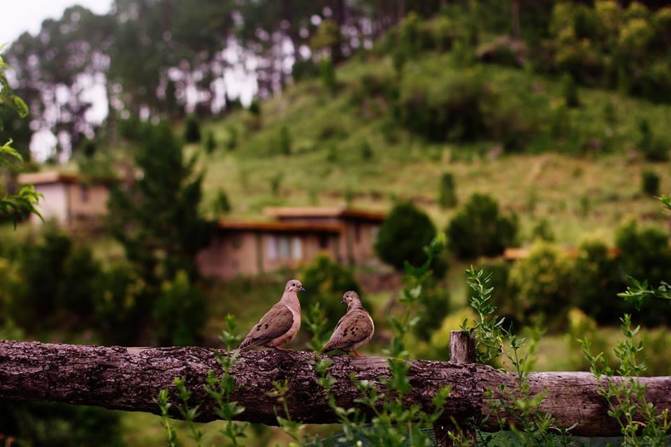 aves2